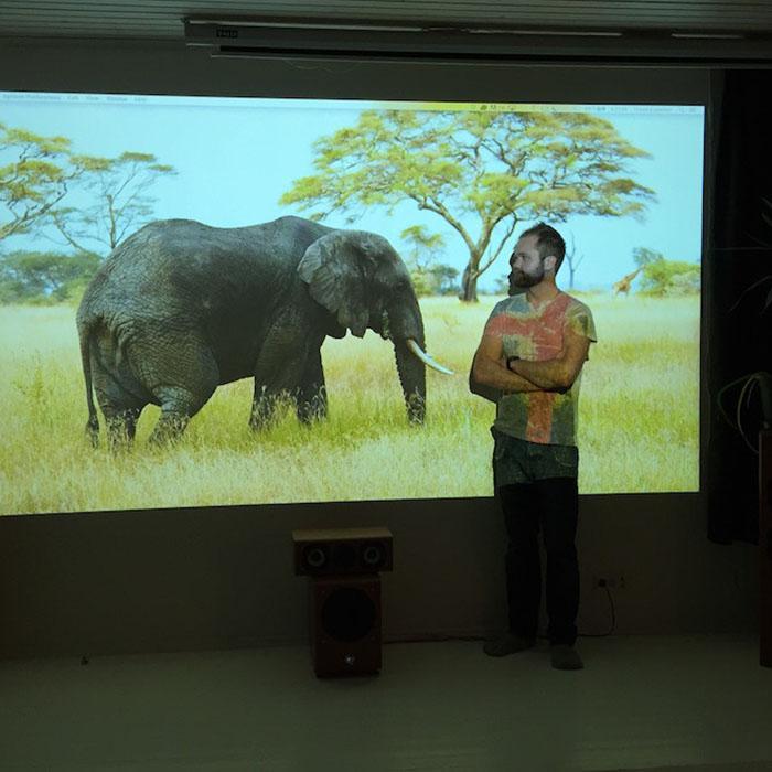 immagine proiettata di un elefante su muro proiettabile